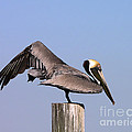 Al Powell Photography USA - Pelican Stretch