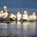 Lori Frisch - Pelicans in a Row