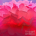 Karen Adams - Petal Light Abstract