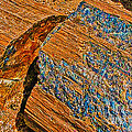 Bob and Nadine Johnston - Petrified Forest Logs