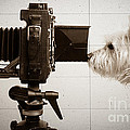 Edward Fielding - Pho Dog Grapher - Ground...
