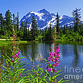 Photography Moments - Sandi - Picture Lake - Mount...