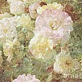 Janette Boyd - Pink and White Roses...