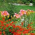 MTBobbins Photography - Pink Daylilies with...