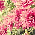 Michelle Frizzell-Thompson - Pink Mums