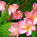 Ben and Raisa Gertsberg - Pink Plumeria