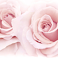 Jennie Marie Schell - Pink Roses from the...