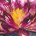 Patricia Allingham Carlson - Pink Water Lily