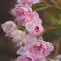 Alice Gipson - Pink Winter Roses One