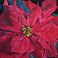 Marna Edwards Flavell - Poinsettia II Painting