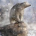 Daniel Eskridge - Polar Bear in a Snowstorm