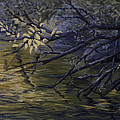 Michael Beckett - Pond Reflections