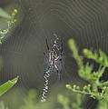 Paul Lyndon Phillips - Pond Spider - 186a3