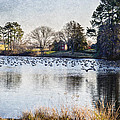 Brian Wallace - Pond With Geese