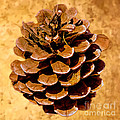 Bob Johnston - Ponderosa Pine Cone...