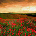 James Shepherd - Poppy Fields
