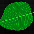 Anand Swaroop Manchiraju - Portrait Of A Leaf