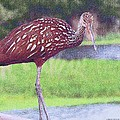 Lenore Senior and Sharon Burger - Portrait of a Limpkin