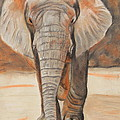 Jeanne Fischer - Portrait of an Elephant