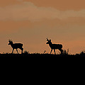 Ernie Echols - Pronghorn Sunrise