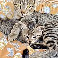 Kim Bemis - Proud Mother Cat and Her...