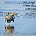 Dawn Currie - Psalms 27 13-14