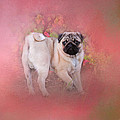 Jai Johnson - Pug In The Garden