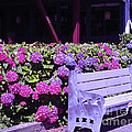 Kym Backland - Purple Bench Pink...