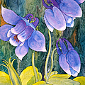 Teresa Ascone - Purple Columbine