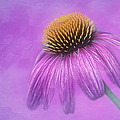Nikolyn McDonald - Purple Coneflower -...