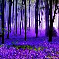 Bruce Nutting - Purple Forest