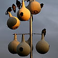 Karen Wiles - Purple Martin Twilight