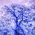 Priya Ghose - Purple Oak Tree Dream