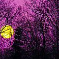 Kathy Liebrum Bailey - Purple Passion Moon at...