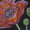 Beverly Livingstone - Purple Poppy