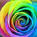 Lena Kouneva - Rainbow Rose