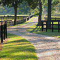 Connie Fox - Ranch Road in Texas