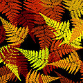 Christina Rollo - Red Abstract Fern Leaf...
