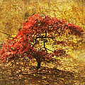 Angie Vogel - Red and Gold