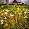 Debra and Dave Vanderlaan - Red Barns in the...