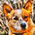 Patty Dunlap - Red Heeler