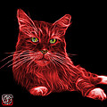 James Ahn - Red Maine Coon Cat -...
