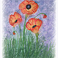 Debbie Portwood - Red Poppies