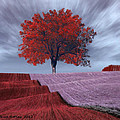 Bruce Nutting - Red Tree in a Field
