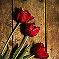 Ethiriel  Photography - Red Tulips