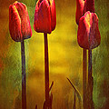 Anne Macdonald - Red Tulips Standing Tall