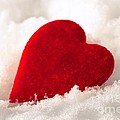 Sviatlana Kandybovich - Red velvet heart on snow...