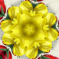 Rose Santuci-Sofranko - Red Yellow and White...