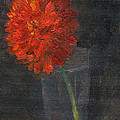 Elizabeth B Tucker  - Red Zinnia