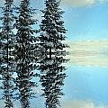 Nina Silver - Reflecting Evergreens in...